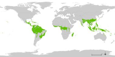 Mapa da distribuição da floresta tropical pelo mundo