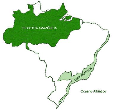 Exercícios Sobre A Floresta Amazônica Mundo Educação