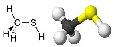 Fórmulas do metanotiol, um composto sulfurado que possui um dos piores cheiros do mundo