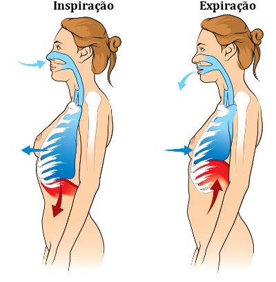 Observe a esquematização da inspiração e da expiração, os dois movimentos respiratórios existentes