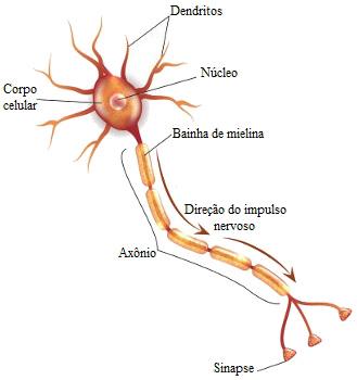 Observe as principais partes de um neurônio, uma célula do tecido nervoso