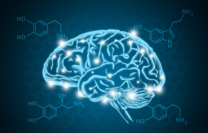 A noradrenalina atua como um importante neurotransmissor, assim como a dopamina.
