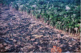 Amazônia - devastação do maior bioma do Brasil