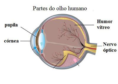 As principais partes do olho humano