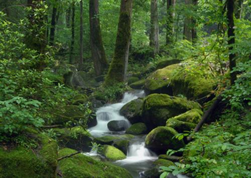 Exemplo de um tipo de paisagem natural sem a intervenção direta do ser humano