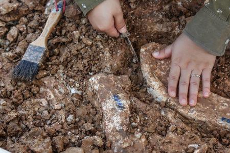 Estudar Paleontologia ajuda na compreensão de como era o planeta no passado