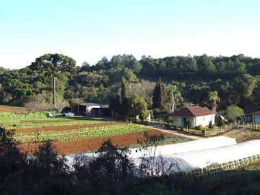Exemplo de pequena propriedade produtora de alimentos básicos e horticultura