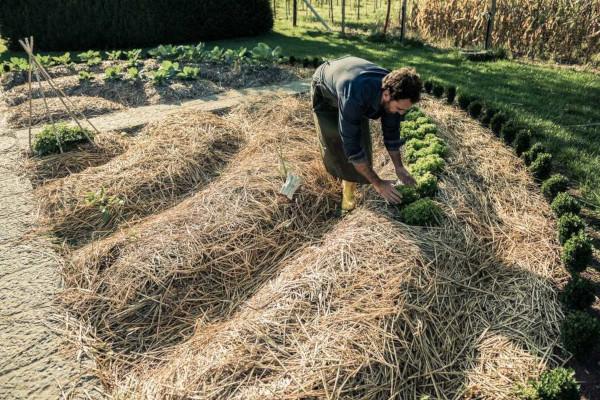 Permacultura utiliza os recursos naturais de maneira sustentável, pensando no equilíbrio energético entre os seres vivos e o meio ambiente.
