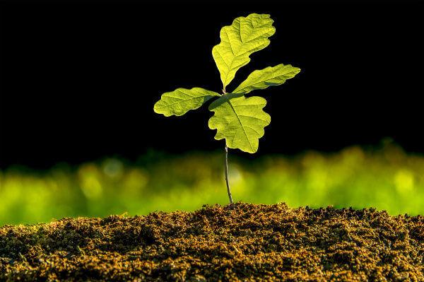 O colênquima é encontrado em plantas jovens em crescimento.
