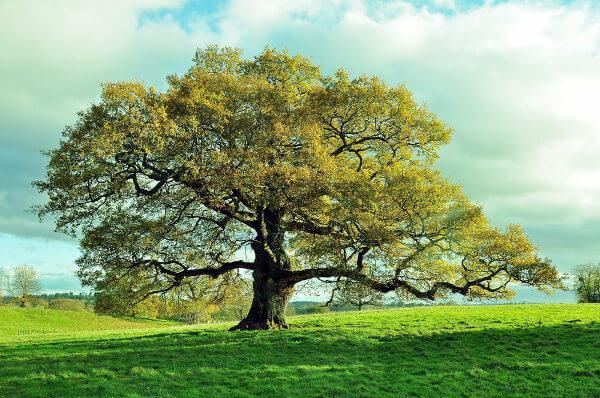 O esclerênquima garante resistência e sustentação a órgãos vegetais que já interromperam seu crescimento.