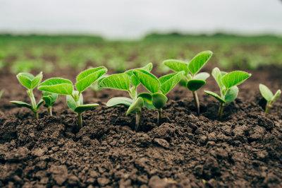 As plantas são organismos capazes de produzir seu próprio alimento