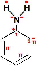 Representação dos polos formados na estrutura da fenilamina