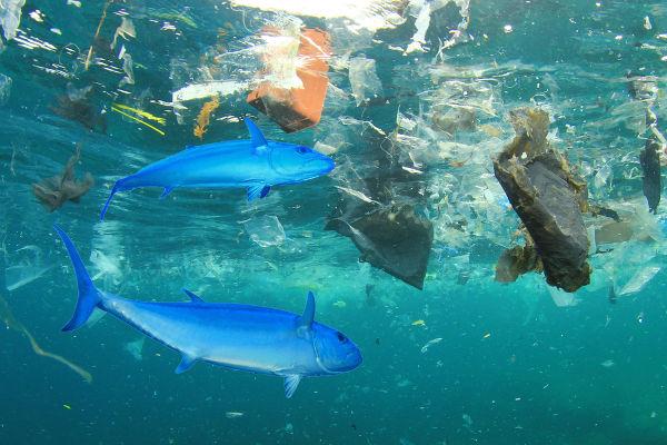 O descarte inadequado é responsável pela poluição de diversos ecossistemas.