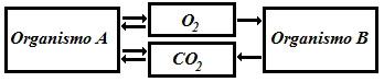 Observe os processos químicos que ocorrem nos organismos indicados