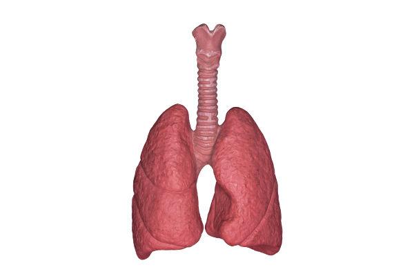 Os pulmões são uma porção do sistema respiratório e são formados por milhares de alvéolos.
