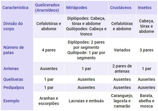 Principais Diferenças Entre Os Grupos De Artrópodes Mundo