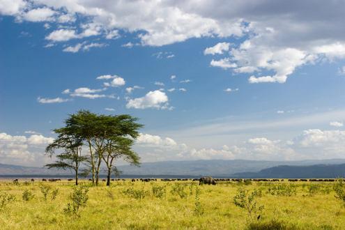 A savana do tipo gramíneo-lenhosa apresenta vegetação rasteira e as árvores são escassas ou inexistentes
