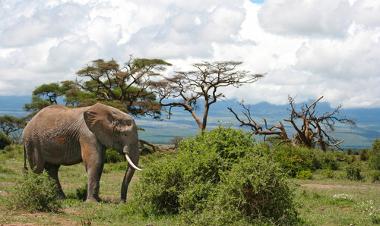 Paisagem das Savanas na África