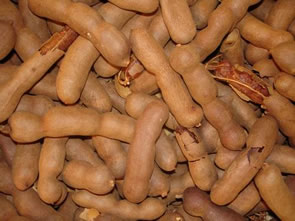 O tamarindo é fruto rico em fibras e sais minerais
