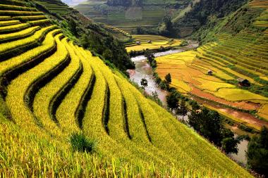 Construção de terraços para reter água e conter a erosão. Rizicultura no Vietnã