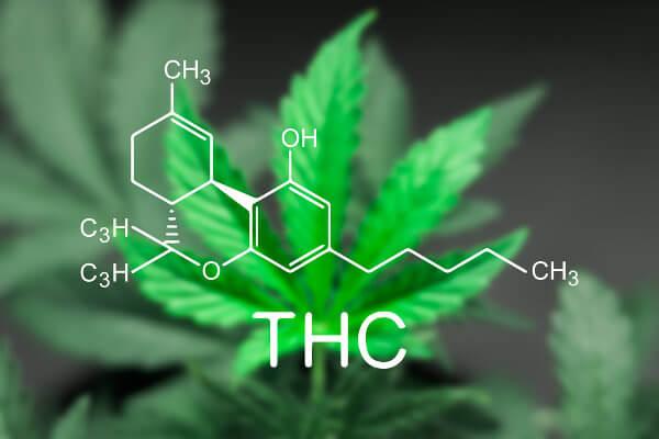 O THC é o principal componente psicoativo da maconha.
