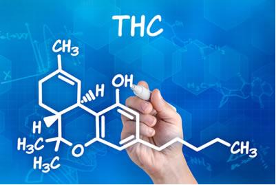 O THC é o principal componente ativo da maconha