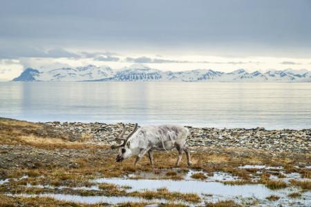 A tundra é um tipo de vegetação rasteira muito resistente às baixas temperaturas do clima polar