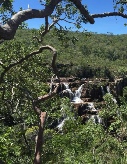 A vegetação que compõe o Cerrado é formada por árvores com troncos tortuosos, arbustos e gramíneas.