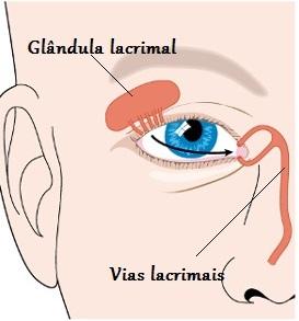 Observe as vias lacrimais e como as lágrimas são drenadas dos olhos