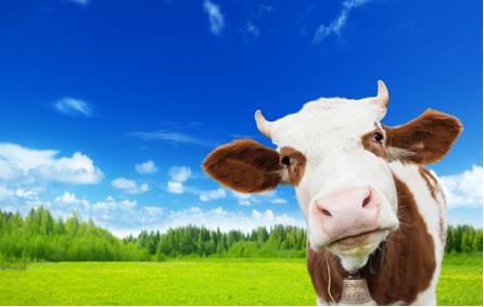 A criação de bovinos leva ao aumento dos gases-estufa na atmosfera, agravando o problema do aquecimento global