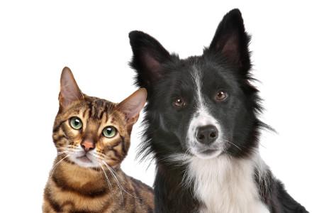 Visão de cães e gatos
