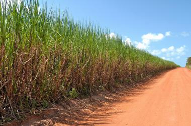 Lavoura de cana-de-açúcar, um dos principais produtos agropecuários brasileiros