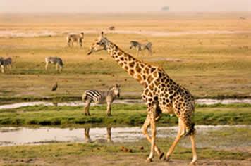 Botsuana possui parques de animais selvagens