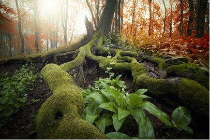 A pressão osmótica faz com que as raízes das árvores consigam levar água até o seu topo