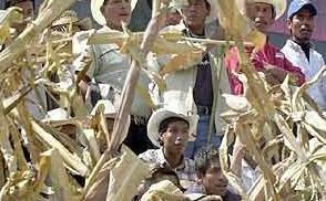 Plantação de milho em La Cañada, México.