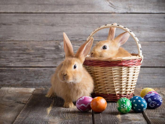 O coelho da Páscoa é aquele que, na tradição, traz os ovos de chocolate, é um dos grandes símbolos da Páscoa moderna.