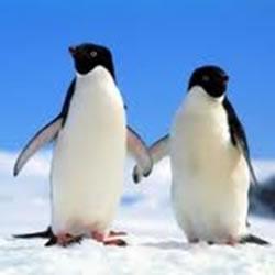 As aves são animais dioicos, ou seja, possuem sexos separados