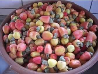 O cajuzinho-do-cerrado é uma espécie nativa do cerrado brasileiro e pertence à mesma família do caju comum