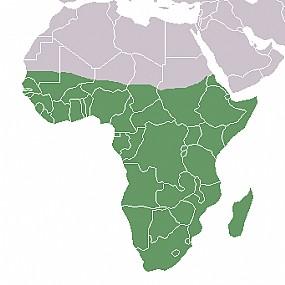 A parte com destaque verde representa a África Subsaariana.
