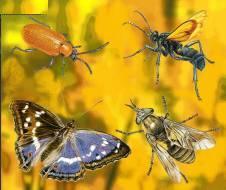 A diversidade dos animais artrópodes.