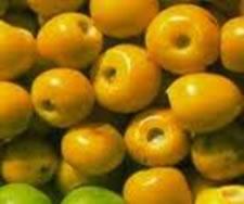 Existem várias espécies de murici distribuídas em todo o continente brasileiro