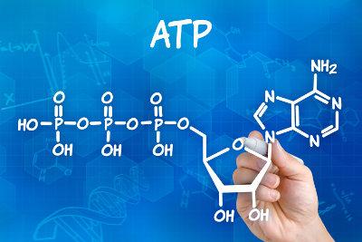 ATP é uma sigla utilizada para denominar a molécula de adenosina trifosfato