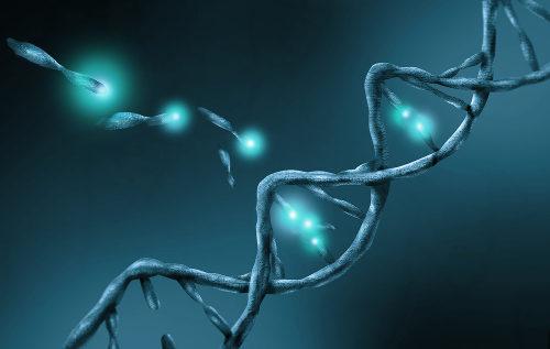 As mutações são modificações no DNA