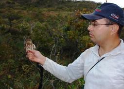 A ornitologia é a área da Biologia que estuda as aves. Fotografia: Fabrício Hiroiuki Oda