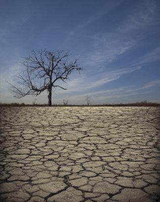 A seca pode reduzir significativamente o número de indivíduos de uma população