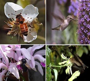 Zoofilia: animais polinizadores (insetos, aves e mamíferos).