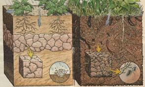 A preparação do solo para o plantio