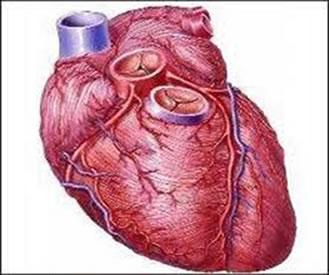 O choque circulatório é uma condição grave com alta taxa de mortalidade