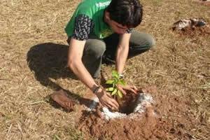 Plantar árvores não contempla os preceitos preservacionistas.