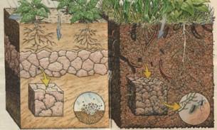 A figura da esquerda mostra um solo usado na agricultura e o da direita com vegetação natural.
